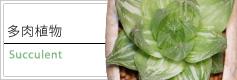 多肉植物 商品一覧