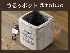 Taiwaオリジナル鉢